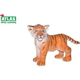 Atlas Tygr mládě