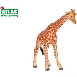 Atlas Žirafa