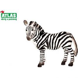 Atlas Zebra