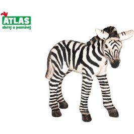 Atlas Zebra hříbě