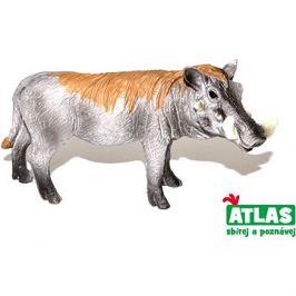 Atlas Prase divoké