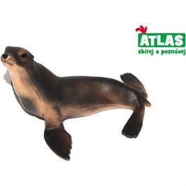 Atlas Lachtan