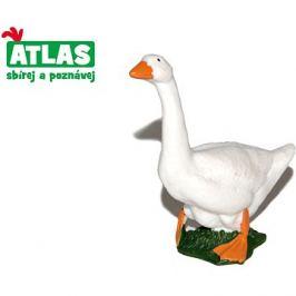 Atlas Husa