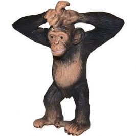 Atlas Šimpanz
