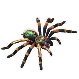 Mac Toys Anatomický model 4D - Tarantule pavouk