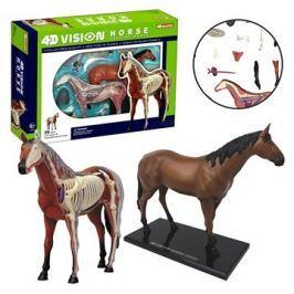 4D Kůň