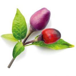 Click and Grow Fialové chilli