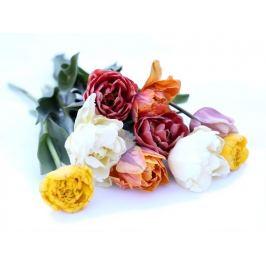 Loukykvět Plnokvěté tulipány směs - 9ks