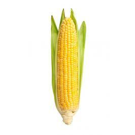 Kukuřičný klas 1ks