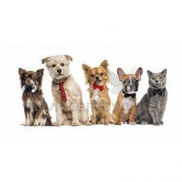 Licenční froté osuška pro děti Pejsci a kočička 70x140